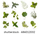 Small photo of Herb leaves close up
