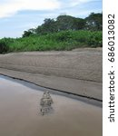 Small photo of A partially submerged American Crocodile on a muddy riverbank in Costa Rica