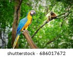 macaw parrot blue gold in... | Shutterstock . vector #686017672