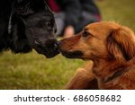 dogs playing | Shutterstock . vector #686058682