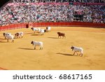SEVILLE - APRIL 30:  The cows herd a bull out of the ring during a bullfight for a sold out crowd at the Plaza de Toros de Sevilla April 30, 2009 in Seville, Spain. - stock photo