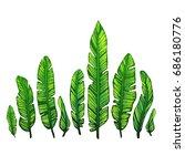 banana leaves on a white... | Shutterstock .eps vector #686180776