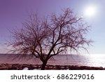 solitary tree | Shutterstock . vector #686229016