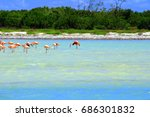 pink flamingos in isla holbox ... | Shutterstock . vector #686301832