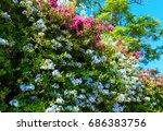 Beautiful Purple Summer Flower...