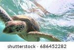 sea turtle swim in the sea. red ... | Shutterstock . vector #686452282