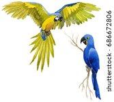 sky bird parrot in a wildlife...   Shutterstock . vector #686672806