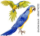 sky bird parrot in a wildlife... | Shutterstock . vector #686674252