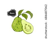 hand drawn sketch style guava... | Shutterstock .eps vector #686687062