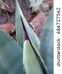 Small photo of Abstract focal zoom close up of an agave spike; Tonto National Forest in Arizona