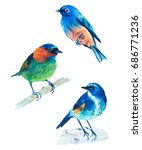 watercolor illustration of... | Shutterstock . vector #686771236