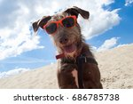 dog in red sunglasses | Shutterstock . vector #686785738