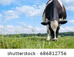 black and white cow on a green... | Shutterstock . vector #686812756