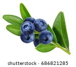 bilberry  blueberries isolated... | Shutterstock . vector #686821285