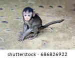 a very cute baby macaque monkey ... | Shutterstock . vector #686826922