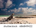 the beach in the galapagos... | Shutterstock . vector #686849422