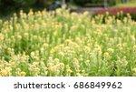 fantastic blurred  flowers...   Shutterstock . vector #686849962