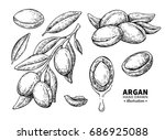argan vector drawing. isolated... | Shutterstock .eps vector #686925088
