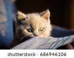 Stock photo cute little kitten 686946106
