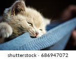 Stock photo cute little kitten 686947072