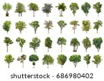 isolated tree on white... | Shutterstock . vector #686980402