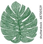 Vector Detailed Palm Tree Leaf