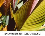 golden and yellow leaves... | Shutterstock . vector #687048652