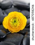 Small photo of Yellow ranunculus and black pebbles
