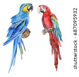 Blue Yellow Macow. Red And...