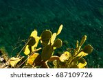 cactus on the background of sea ... | Shutterstock . vector #687109726