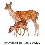Deer Female With Baby Isolated...