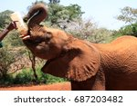 elephant in the david sheldrick ... | Shutterstock . vector #687203482