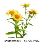 inula isolated on white... | Shutterstock . vector #687284902