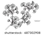 ginkgo leaves by hand drawing... | Shutterstock .eps vector #687302908