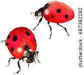 exotic ladybug wild insect in a ... | Shutterstock . vector #687382282