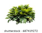 jungle tropical plant isolated  ... | Shutterstock . vector #687419272