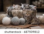 group of small striped kittens... | Shutterstock . vector #687509812
