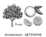 orange set. isolated on white... | Shutterstock .eps vector #687550948