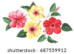 Set Of Hibiscus Flowers With...
