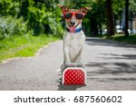 Small photo of lost and homeless jack russell dog abandoned at the street waiting to be adopted, luggage or a bag