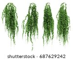 ivy leaves isolated on a white... | Shutterstock . vector #687629242