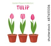 spring flower in flower pot.... | Shutterstock .eps vector #687655336