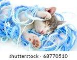 Stock photo funny kitten sleeping 68770510