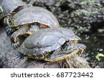 turtles line up for sun on a... | Shutterstock . vector #687723442
