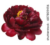 dark red peony isolated on... | Shutterstock . vector #687805456
