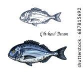 bream fish vector sketch icon.... | Shutterstock .eps vector #687815692