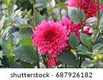dahlia | Shutterstock . vector #687926182