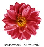 Red Flower On  Isolated White...