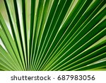 green palm leaf photo background | Shutterstock . vector #687983056