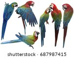 set of macaw isolated on white...   Shutterstock . vector #687987415